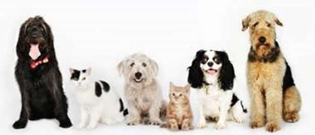 FVP-group-of-dogs